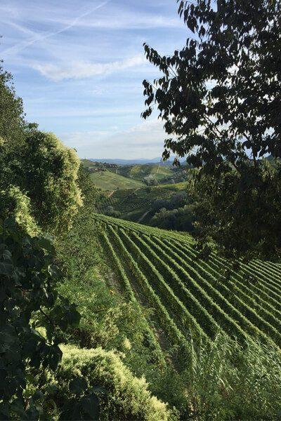 Secrets-Of-Piemonte-TrEduC-Langhe-Hills